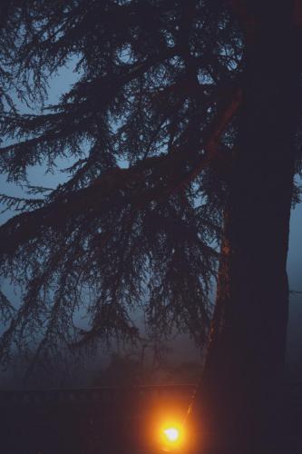 Mariage en montagne - brume et lumière dans les arbres